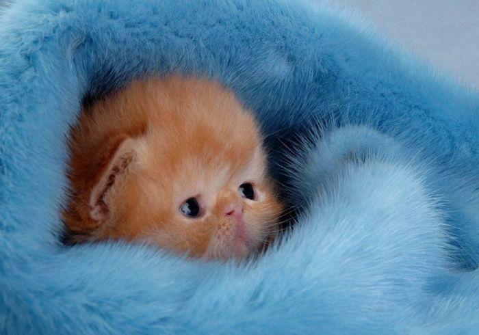 100 photos de chatons tout mignon !